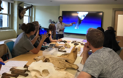 Assistant Professor of Anthropology Krish Seetah in the Zooarchaeology class.